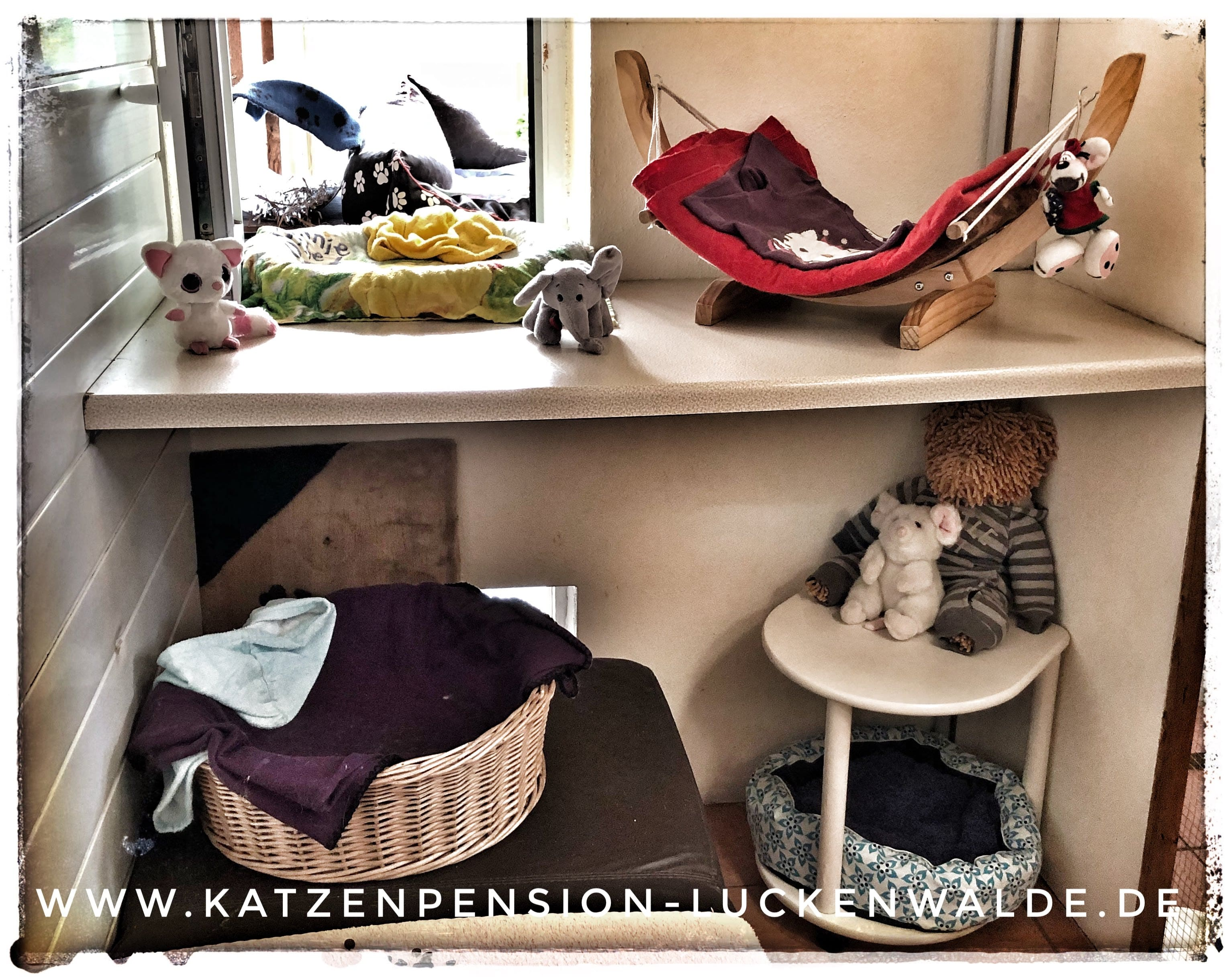Tierpension In Meiner Nähe in ihrer Region Berlin Charlottenburg-Nord - IMG 9522 min - TIERHOTEL - TIERBETREUUNG - KATZENPENSION in der NÄHE - FREIGEHEGE für KATZEN - KATZENPENSION KOSTEN