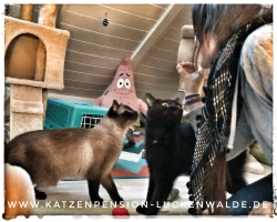 Tierpension In Meiner Nähe in ihrer Region Berlin Charlottenburg-Nord - IMG 7566 min - TIERHOTEL - TIERBETREUUNG - KATZENPENSION in der NÄHE - FREIGEHEGE für KATZEN - KATZENPENSION KOSTEN