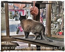 Tierpension In Meiner Nähe in ihrer Region Berlin Charlottenburg-Nord - IMG 8315 min - TIERHOTEL - TIERBETREUUNG - KATZENPENSION in der NÄHE - FREIGEHEGE für KATZEN - KATZENPENSION KOSTEN