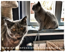 Tierpension In Meiner Nähe in ihrer Region Berlin Charlottenburg-Nord - IMG 8745 min - TIERHOTEL - TIERBETREUUNG - KATZENPENSION in der NÄHE - FREIGEHEGE für KATZEN - KATZENPENSION KOSTEN
